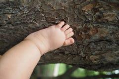 Peu de pied Photo libre de droits