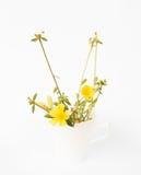 Peu de plante et fleur jaune Image stock