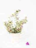 Peu de plante et fleur violette Image libre de droits