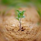 Peu de plante verte Image libre de droits