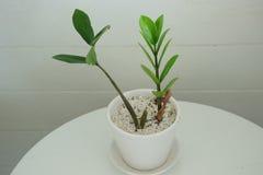 Peu de plante verte Images libres de droits