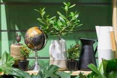 Peu de plante verte Photos stock