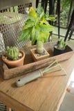 Peu de plante verte décorée sur la table en bois Image libre de droits