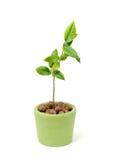 Peu de plante verte dans le bac Photos stock