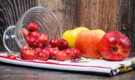 Peu de pommes de paradis et les grandes pommes habituelles Photo libre de droits