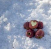 Peu de pommes sur la neige Images libres de droits