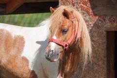 Peu de poney de caramel se cachant sous la hutte animale du ` s sous le ciel nuageux image stock