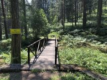 Peu de pont dans la forêt image stock