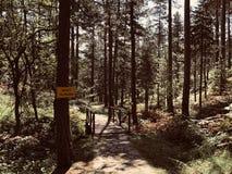 Peu de pont dans la forêt image libre de droits
