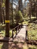 Peu de pont dans la forêt photos libres de droits