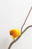Peu de poussin jaune de perruche Photo libre de droits
