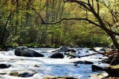 Peu de rivière Image libre de droits