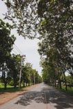 Peu de rue suburbaine complètement des arbres de nature Images libres de droits