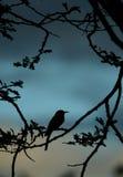 Peu de silhouette de bee-eater Photos libres de droits