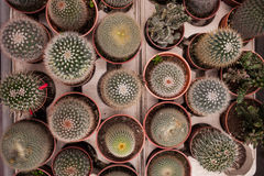 Peu de vue supérieure d'usines mises en pot de cactus photos stock