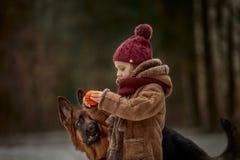 Peu fille avec le 6ème chiot de mois de berger allemand au premier ressort images libres de droits
