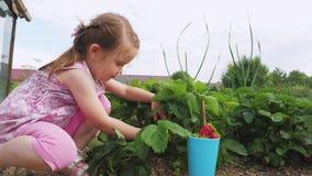 Peu fille mignonne moissonnant des fraises dans l'arrière-cour de la maison banque de vidéos