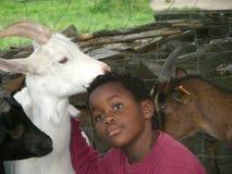 Peu fille songeuse parmi des chèvres, France photographie stock libre de droits