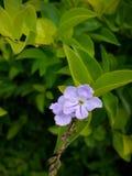 Peu fleur et feuilles pourpres image stock
