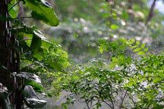 Peu forrest en pleuvant Image stock