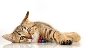 Peu 3 mois de chaton Image libre de droits