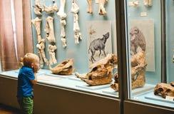 Peu musée d'histoire de garçon regarde l'émotion d'objets exposés image libre de droits