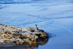 Peu oiseau sur une pierre par la mer photos stock