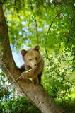 Peu ours Photo stock