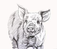 Peu porcin illustration de vecteur