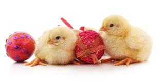 Peu poulets avec des oeufs de pâques images libres de droits