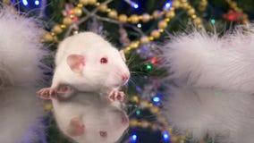 Peu rat blanc sur un fond de l'arbre de Noël symbole animal de 2020 sur le calendrier chinois clips vidéos