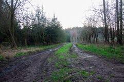 Peu route sale dans les bois image stock