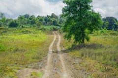 Peu tous terrains dans les forêts Photographie stock libre de droits