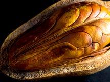 Peulen en zaden van Mahonie op zwarte achtergrond royalty-vrije stock fotografie