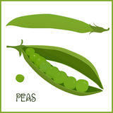 Peulen van groene erwten geïsoleerde vectorillustratie Stock Fotografie