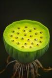 Peulen van lelies. royalty-vrije stock afbeelding