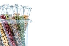 Peulvrucht met genetisch gewijzigde Tarwe, Installatiecel Stock Foto