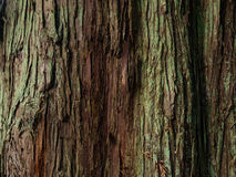 Peuplement vieux Forest Near Seattle image libre de droits