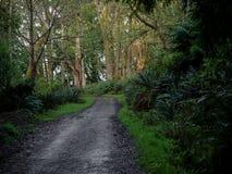 Peuplement vieux Forest Near Seattle images libres de droits