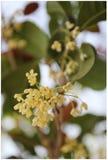 Peut fleurir Photo stock