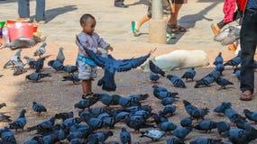 Peuter voedende duiven stock foto