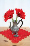 Pewter can with red Amaryllis. Antique pewter can with Amaryllis flower in blossom Stock Image