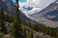 Peyto Glacier. In Banff National Park, Canada Stock Image