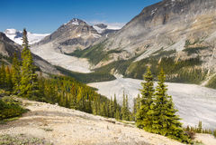 Peyto Glacier, Peyto Creek Royalty Free Stock Photography