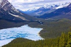 Peyto Lac-Banff Photographie stock libre de droits