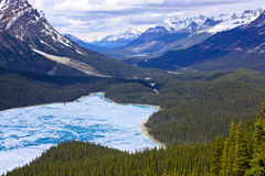 Peyto Lago-Banff Fotografia de Stock Royalty Free