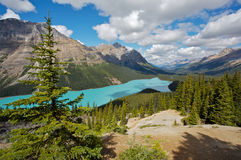 Peyto Lake. Beautiful Peyto Lake in Banff National Park in the Rocky Mountains of Canada Royalty Free Stock Images