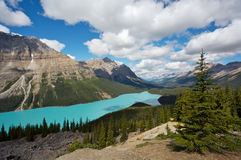 Peyto Lake. Beautiful Peyto Lake in Banff National Park in the Rocky Mountains of Canada Royalty Free Stock Photo