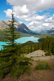 Peyto Lake. Beautiful Peyto Lake in Banff National Park in the Rocky Mountains of Canada Stock Image