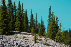 Peyto Lake. Beautiful Peyto Lake in Banff National Park, Alberta, Canada Stock Image